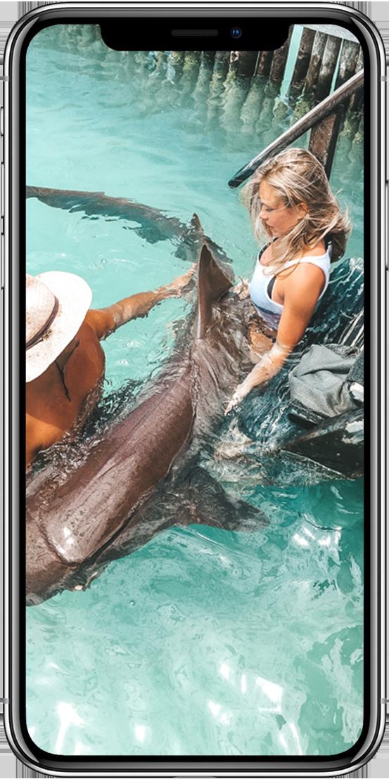 iPhone8--Hai-bearbeitet2.0